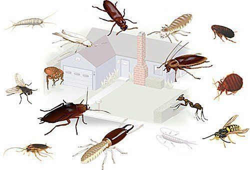 Фото насекомых, которые могут завестись дома