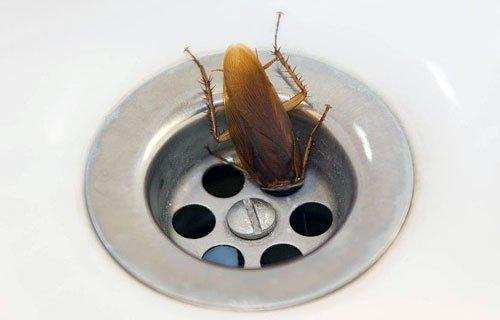 древо тараканы пока есть руки ноги ставок действующей ипотеке