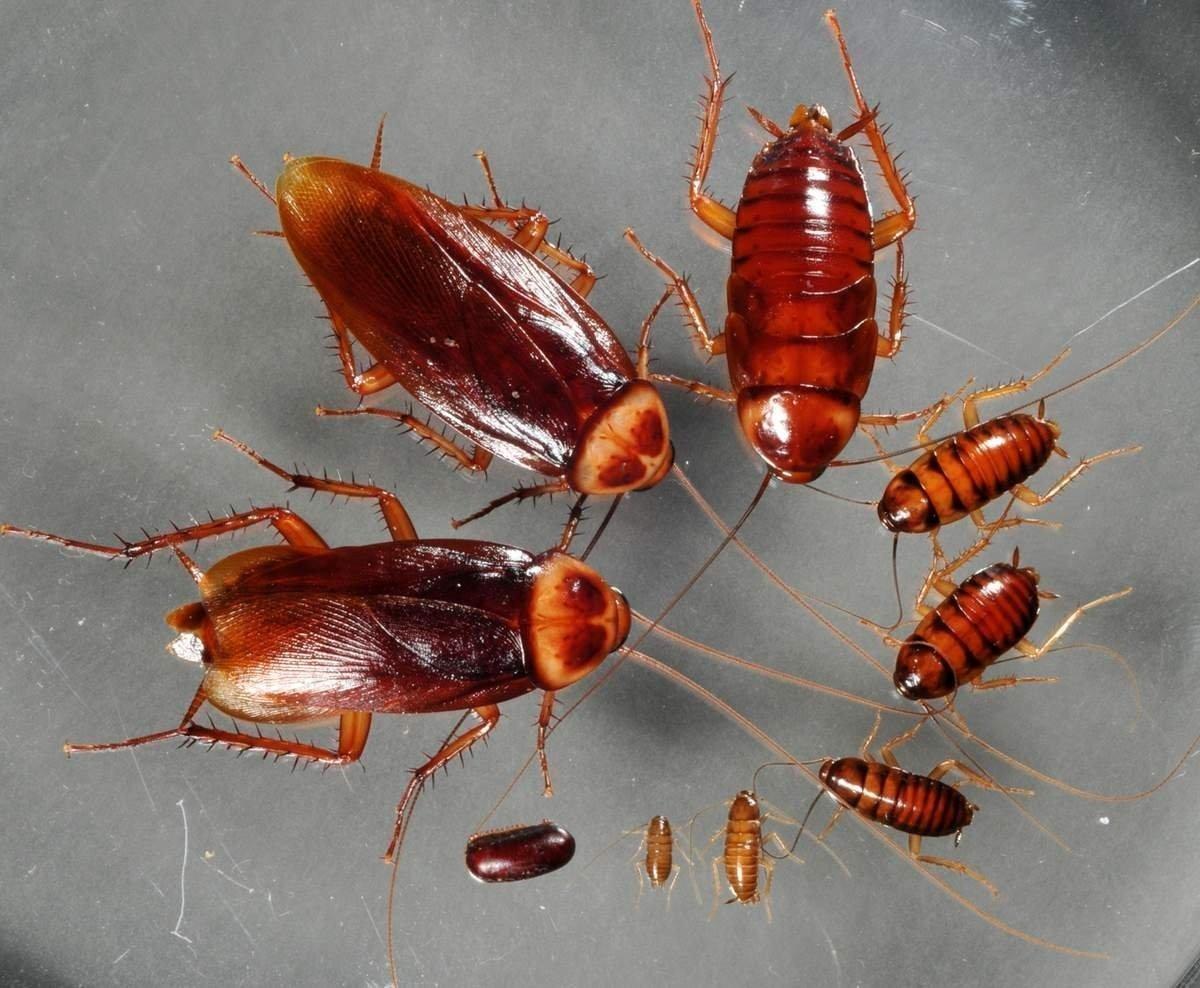 Как избавиться от тараканов в 97