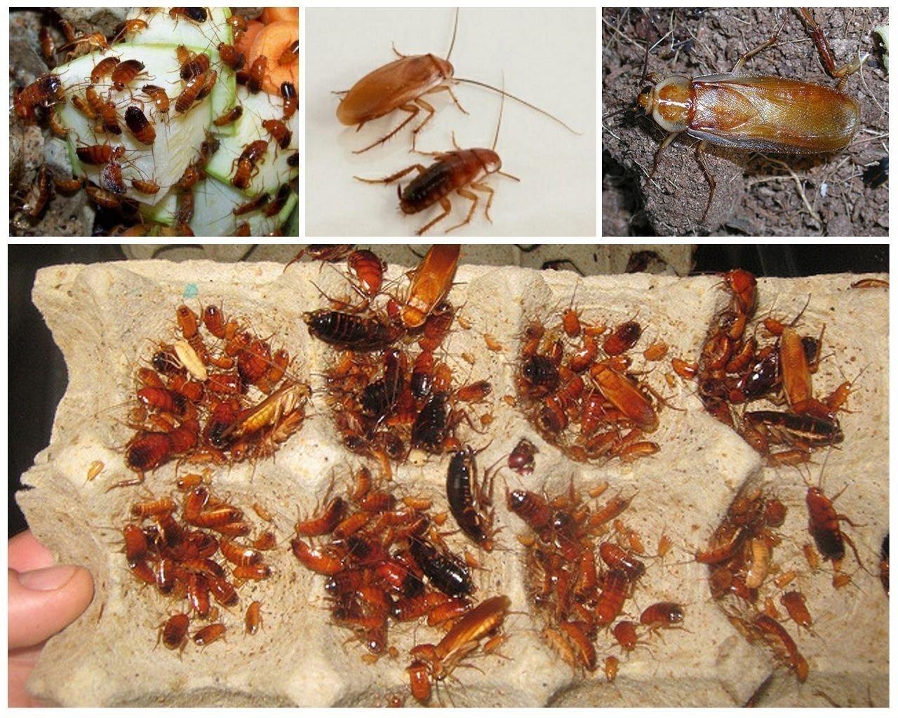 Как избавиться от тараканов в 889